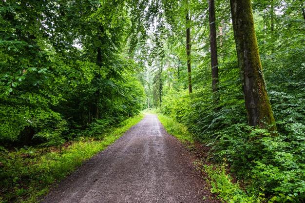 chemin de randonnées vers Saint-Pardoux-La-Rivière